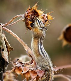 getting the last of the sunflower seeds. credit: Sandy Images via Flickr
