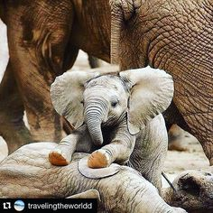 #elephants great shot @travelingtheworldd