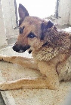 Update: Facebook page states he has been adopted.  Heartbroken neglected dog barely makes eye contact at high-kill shelter