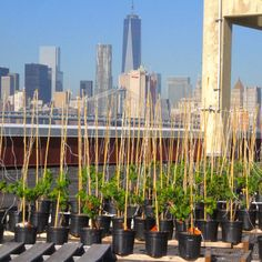 NYC's first rooftop winery is coming