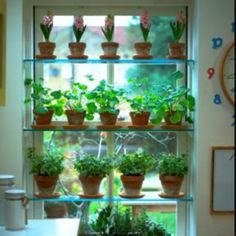 Grow great herbs indoors on window plant shelves. The directions given below are for wooden plant shelves, but glass can easily be substituted Window Shelf For Plants, Indoor Plant Shelves, Kitchen Window Shelves, Glass Shelves, Window Sill, Kitchen Windows, Wood Shelves, Window Ledge, Window Jamb