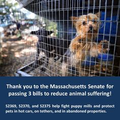Massachusetts Senate just passed three bills to reduce animal suffering by protecting pets in hot cars, on tethers, or in abandoned properties and by fighting puppy mills!  We're grateful to Senators Karen Spilka, Jamie Eldridge, Mark Montigny, and Senator Pat Jehlen for their leadership and to the full Senate for their support!