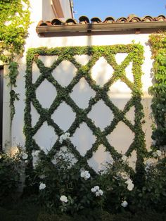 LOVE the look of Espalier vines... hubby is going to Espalier our fence with Star Jasmine, can't wait!