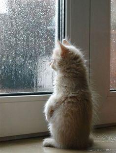 ..Pffff...il pleut......
