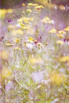 pastel dreams III ~ by Adriana Glackin