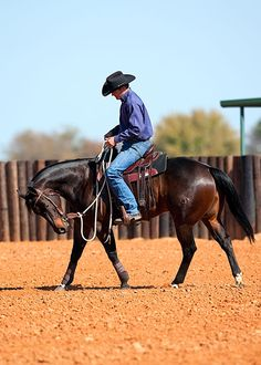 Clinton Anderson Training Tip of the Week: Be realistic of an older horse's capabilities | Downunder Horsemanship