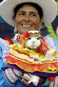 Guinea Pig at a Festival in Peru - Cochon d'Inde à un Festival au Pérou