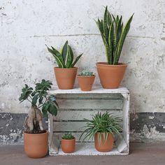 Curved Terracotta Plant Pot - SmallBuy Curved Terracotta Plant Pot - Small Vintage Tableware at Scaramanga Terracotta Plant Pots, Vintage Tableware, Window Sill, Potted Plants, Planter Pots, Profile, Clay, Desk, Shapes