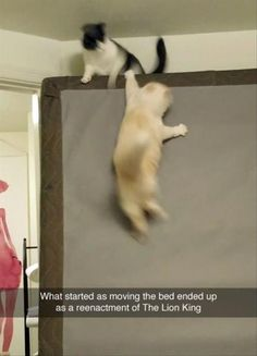 Everything Funny - Updated Hourly! - Thousands of Funny Pictures, Funny Text Messages, Funny Memes, Quotes and More for Hours of Entertainment! Funny Animal Memes, Cute Funny Animals, Funny Animal Pictures, Cat Memes, Funny Cute, Funny Jokes, Cute Cats, Funny Pics, That's Hilarious