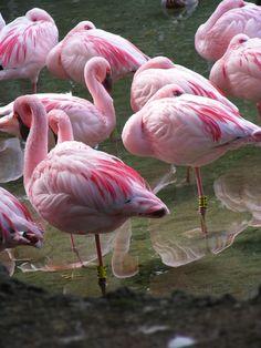 Flamingo Photo by Check_my_shots | Photobucket