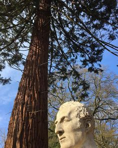 Duke of Wellington beneath our Wellingtonia  #trees #visit #wellingtonia #Dukeofwellington #nature #visitengland #walks #walking #naturewalks #Sequoiadendron #sequoiadendrongiganteum #redwood #giant #gardensopen #bluesky