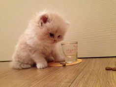 Cute kitty with a glass! Cuki kiscica pohárral! Ohh... Cute Kittens, Cute Cats And Dogs, Baby Kittens, Animals And Pets, Cats And Kittens, Baby Animals, Funny Animals, Cute Animals, Pretty Cats