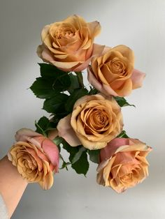 Flower Colors, Colorful Flowers, Fall Wedding Flowers, Wedding Bouquets, Rose Varieties, Flower Names, Spray Roses, Love Rose, Flower Aesthetic