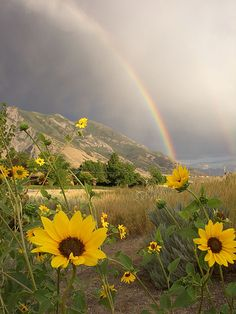 Sunflower and rainbow Rainbow Sky, Love Rainbow, Over The Rainbow, Nature Pictures, Cool Pictures, Beautiful Pictures, Rainbow Aesthetic, Amazing Nature, Beautiful World