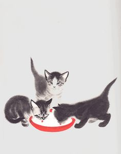 Pretty soon they could lap milk almost as well as grown-up cats