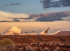 @JayDickmanPhoto  Namibia is one of my favorite places on the continent of Africa.  Formerly German South-West Africa, then South West Africa (officially changing the name to Namibia in 1968) Namibia officially became independent on March 21, 1990.  Home to the Namib Desert, the Skeleton Coast, the Etosha Pan, Damaraland, the Palmwag Concession, and Dr. Laurie Marker's Cheetah Conservation Fund, Namibia provides an amazing blend of cultural, landscape and wildlife opportunities for…