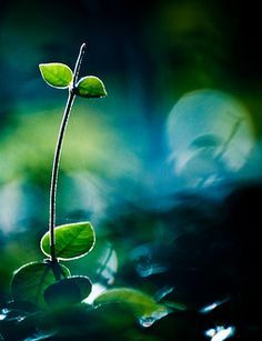 Blue with Green Love Blue, Navy And Green, Tree Leaves, Plant Leaves, Bokeh Photography, Magical Forest, Green Nature, Amazing Nature, Shades Of Blue