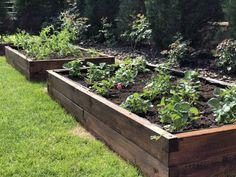 Jahody vo vyvýšenom záhone z našej produkcie. Plants, Plant, Planets