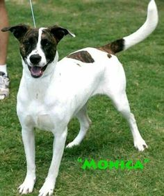 Urgent!  Euth listed for September 5. Monica. Young female hound mix. 40 lbs. Very sweet. Good with people and other animals. At Galveston County Animal resource Center.  Texas City, Tx. (409) 948-2485. ID #27947. Please share everywhere!