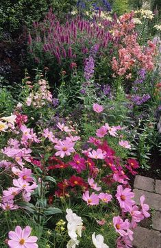 Cottage Garden with Cosmos in the forefront