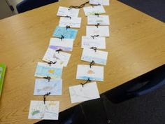 Food chains: Students started with mangrove leaves...
