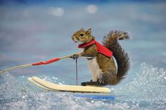 Watch squirrel WATER SKIING behind remote controlled boat - and ...