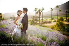 keys creek lavender farm (Valley Center)