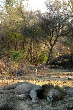 Madikwe Game Reserve, North-West, South Africa https://www.pinterest.com/mausby/south-africa-home-including-neighbours/