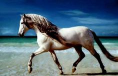 Horse Breed Suggestions ;) | Shroud of the Avatar Forum