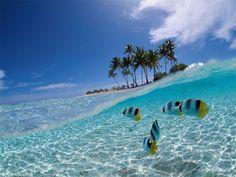 Cayo Coco esta situado frente a la costa norte de Cuba. Es un popular destino turistico. Cayo Coco es conocido por sus cristalinas aguas tranquilas claras.