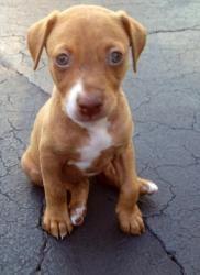 Animals I want on Pinterest | Boxer Mix, Bengal Kittens ...