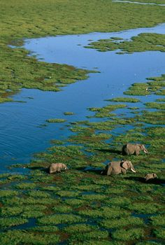 Amboseli National Park, Kenya #africa #elephants #nature