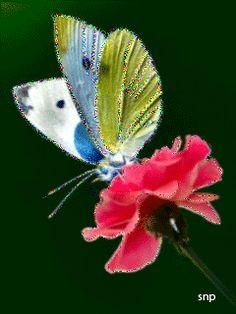 Красивая бабочка на цветке - анимация на телефон от snp №1275221 Butterfly Gif, Butterfly Wallpaper, Glitter Gif, Random Gif, Heart Gif, More Images, Beautiful Butterflies, Animated Gif, Birds