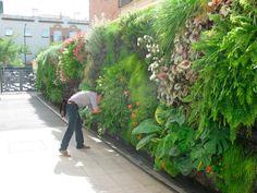 jardim-vertical