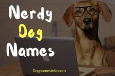 Nerdy Dog Names: Awesome Geeky Names for Your Pup Girl Dog Names, Female Dog Names, Pet Names, Attitude Caption For Instagram, Instagram Captions For Friends, Birthday Captions For Myself, Wedding Captions, Funny Wifi Names, Caption For Girls