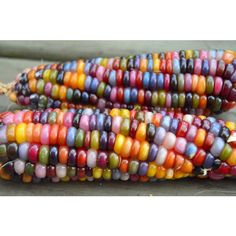 This is Glass Gem Corn. It's a corn varietal with different colored kernels. I would have called it Rainbow Corn myself, but that's just me and I'm way better at naming things than some people.