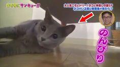 トコトン掘り下げ隊!生き物にサンキュー!!ネコも癒される熱帯魚SP! 2017年8月20日