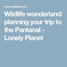Wildlife wonderland: planning your trip to the Pantanal - Lonely Planet