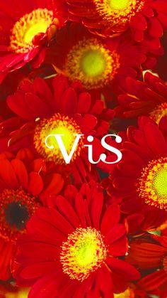 ViS | ビスオフィシャルサイト