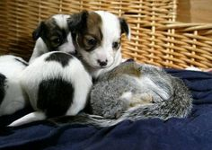 Baby squirrle welcomed by dog family