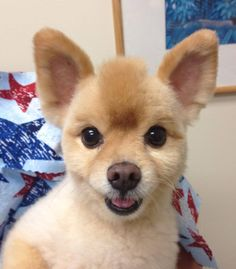 Isn't Fox's new haircut adorable?? We think so!
