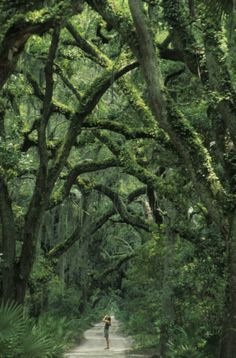 One of the most amazing Paths that I've taken...Cumberland Island, Sea Islands, Georgia.