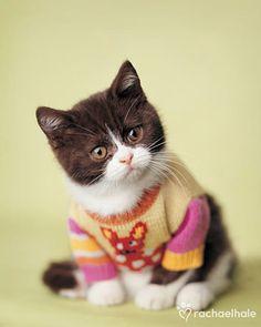 I love kittens. Kitten in sweater - too cute!