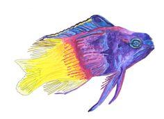 Royal Gramma fish hand drawn watercolor illustration by RobertaTomei on Etsy