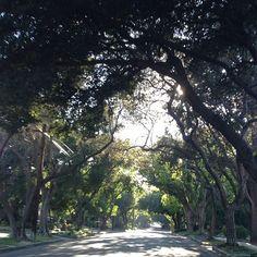 Natural Light • Claremont, CA • August 2013