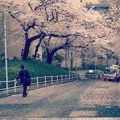 Sakura at Tokyo Tower www.couchflyer.com #sakura #tokyo #japan #spring #instagood