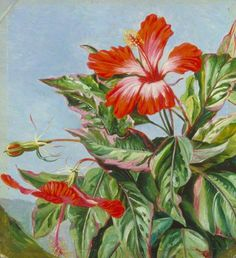 A New Caledonian Plant, Hibiscus cooperi, Marianne North; 1870s; Oil on board; Collection: Royal Botanic Gardens, Kew, Richmond, Surrey, England