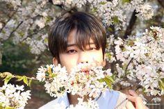 - moonjongyeup: Prince of Spring 🍃 B A P Youngjae, Himchan, Baby Fan, Photoshoot Concept, Bap, Woozi, K Idols, Prince, Anime Cosplay