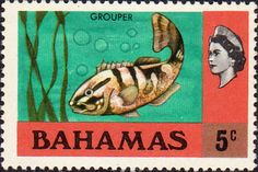 Postage Stamps Bahamas 1971 Nassau Grouper SG 363 Fine Used SG 361 Scott 317 For Sale. Take a look! Buy it Now