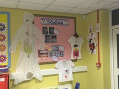 Digestive system display year 4 science
